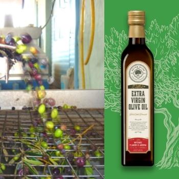 Olives entering into olive oil mill of Artem Oliva